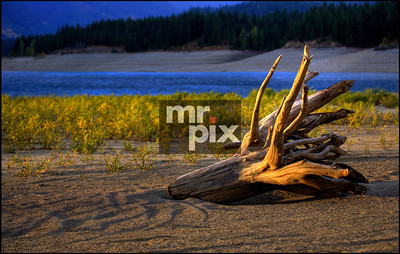 Lake Cle Elum driftwood - Environmental Photography in Eastern Washington