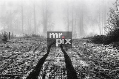 Foggy Trails - Landscapes by Michael Moore Photography MrPix.com
