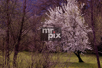 Spring Has Sprung, a month early this year - Landscape photography by Michael Moore