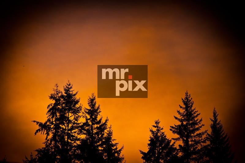 Evergreen Trees at sunrise