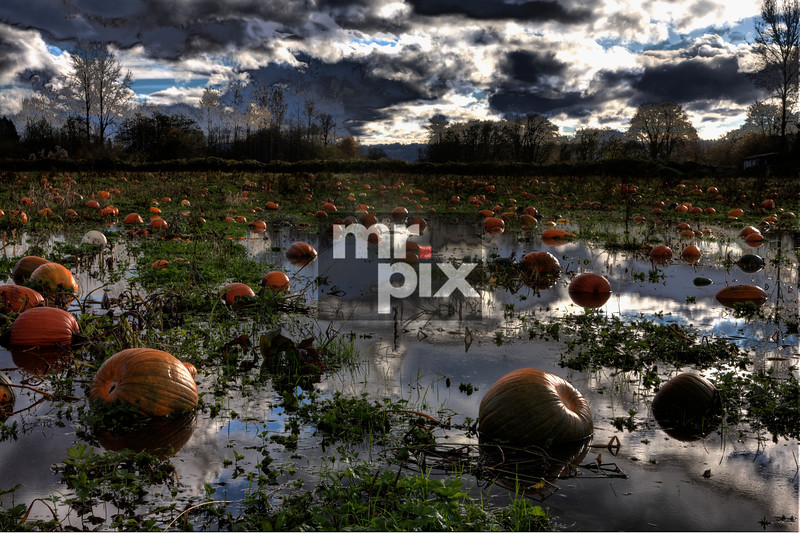 Chasing Valley Pumpkins