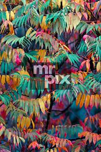 Autumn Color - Landscape photography by Michael Moore - MrPix.com