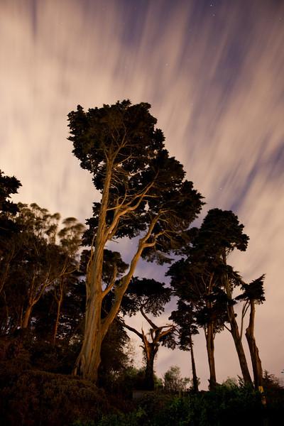Night in the Presidio