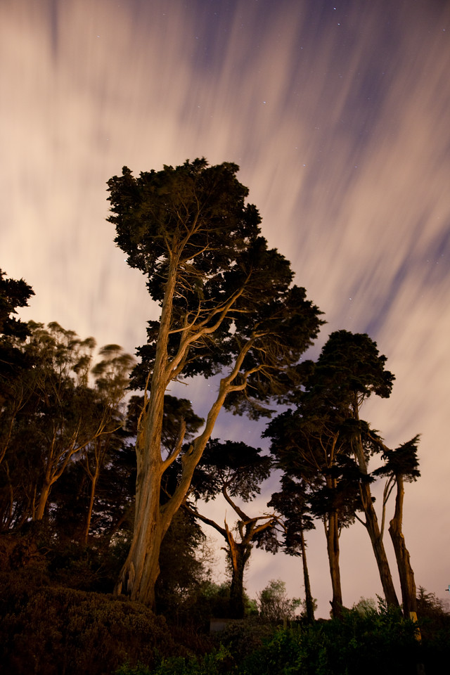 Night in the Presidio