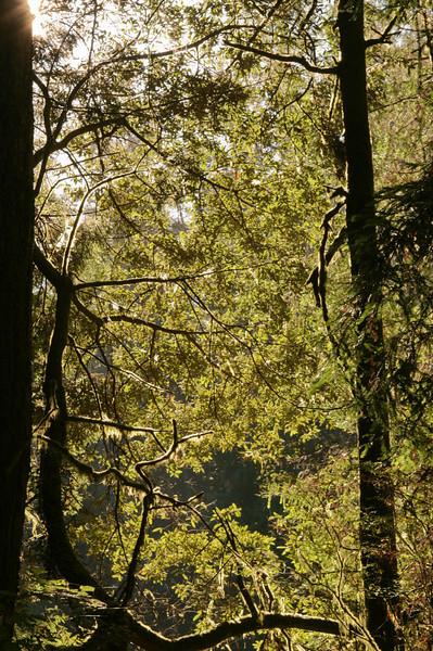 Russian Gulch Trail, Mendocino, CA