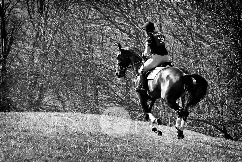 Equestrian Photography in Virginia - eventing