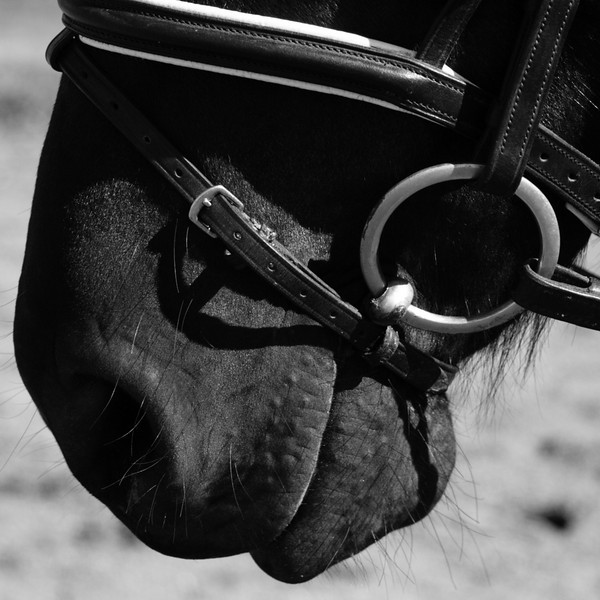 Equestrian Photography in Virginia - bridle detail
