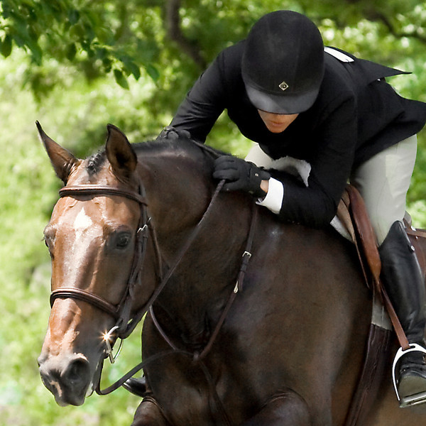 Equestrian Photography in Virginia - Upperville - hunter