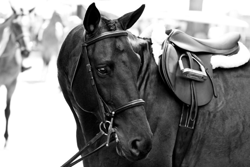 Equestrian Photography in Virginia - Upperville