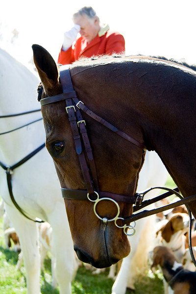 Dedication Equestrian Photography in Maryland - fox hunting