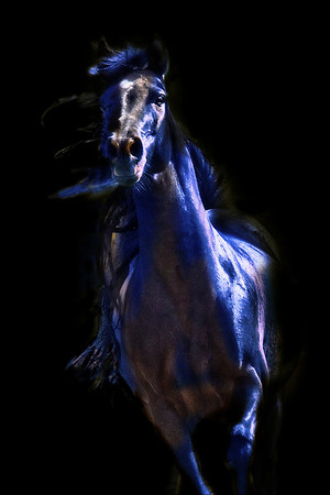"<center>Blue Horse Dreaming</center> <center>By Anita Jesse</center> <img alt=""black Arabian horse running toward viewer with highlights in blue  by Anita Jesse"">"