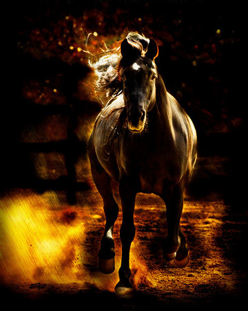 "<center>A Dark Horse Came Running</center> <center>By Anita Jesse</center> <img alt=""black Arabian horse running toward viewer by Anita Jesse"">"