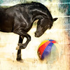 "<center>Beach Ball Classic</center> <center>By Anita Jesse</center> <img alt=""black Mustang playing with beach ball by Anita Jesse"">"