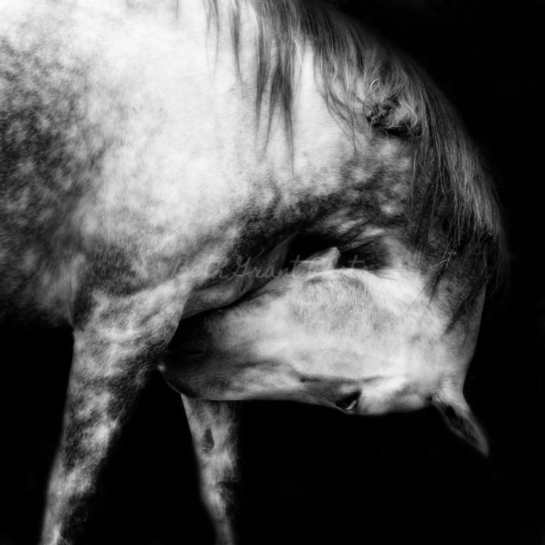 """Horses Embody Grace""<br /> Smithsonian Magazine Editor's Pick<br /> August, 2011"