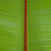 Leaf, Costa Rica