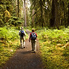 Walkers Quinault Rainforest, Olympic National Park, WA