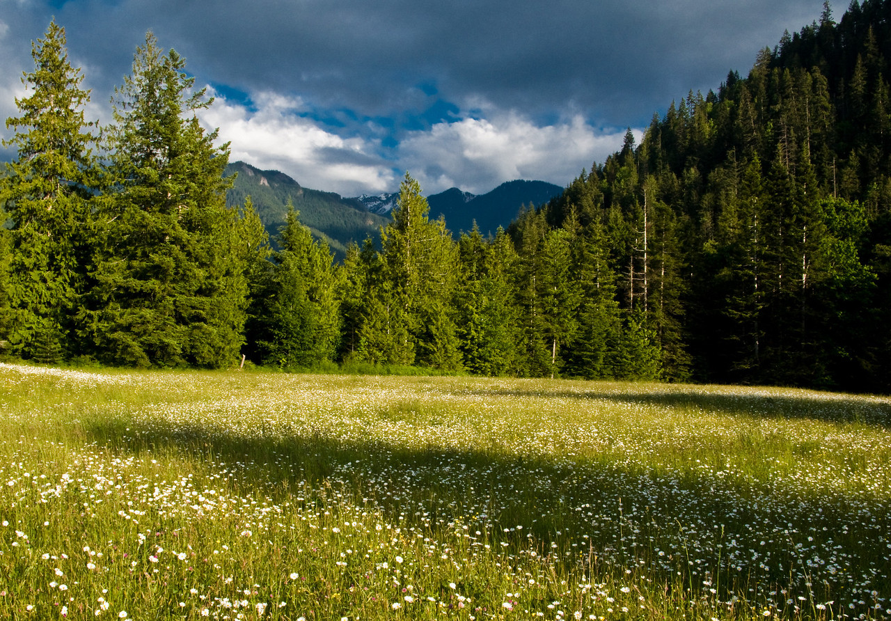 Field and Mountains, Olympic National Park, WA