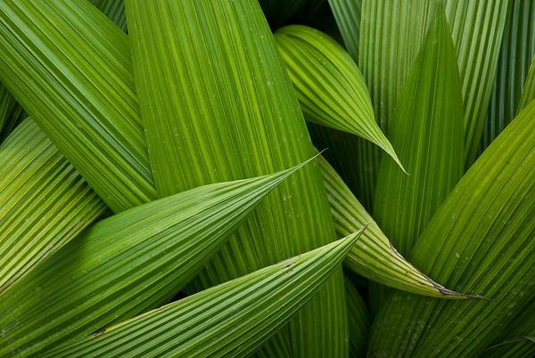 Leaf Patterns, Costa Rica