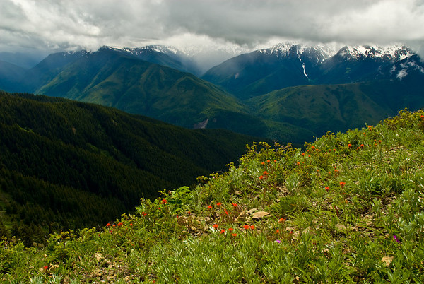 Elwha Valley from Obstruction Point, Olympic National Park, WA