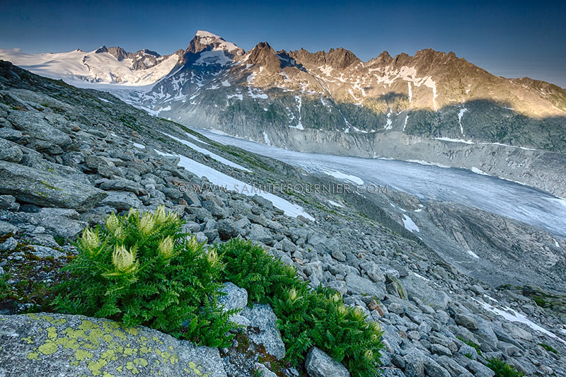Glacier du Rhône - Valais - Juillet 2015