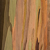 Eucalyptus_Bark_Nov242016_0004