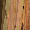 Eucalyptus_Bark_Nov242016_0004