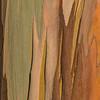 Eucalyptus_Bark_Nov242016_0008