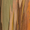 Eucalyptus_Bark_Nov242016_0008