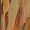 Eucalyptus_Bark_Nov242016_0028