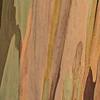 Eucalyptus_Bark_Nov242016_0010