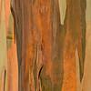 Eucalyptus_Bark_Nov242016_0047