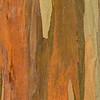 Eucalyptus_Bark_Nov242016_0038