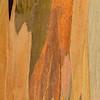 Eucalyptus_Bark_Nov242016_0016