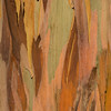 Eucalyptus_Bark_Nov242016_0026