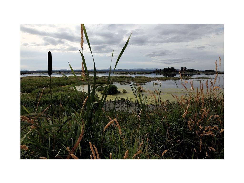 Eugene Wetlands