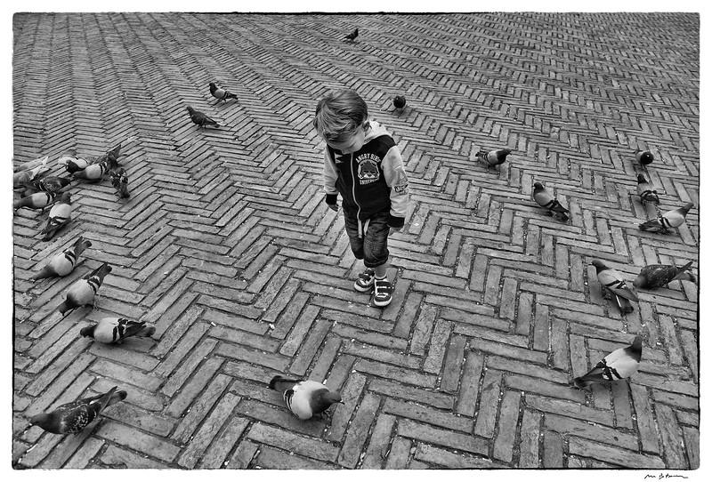 Angry Bird. Siena. Italy, 2015. Original Fine Art Documentary Photograph by Michel Botman © north49exposure.com