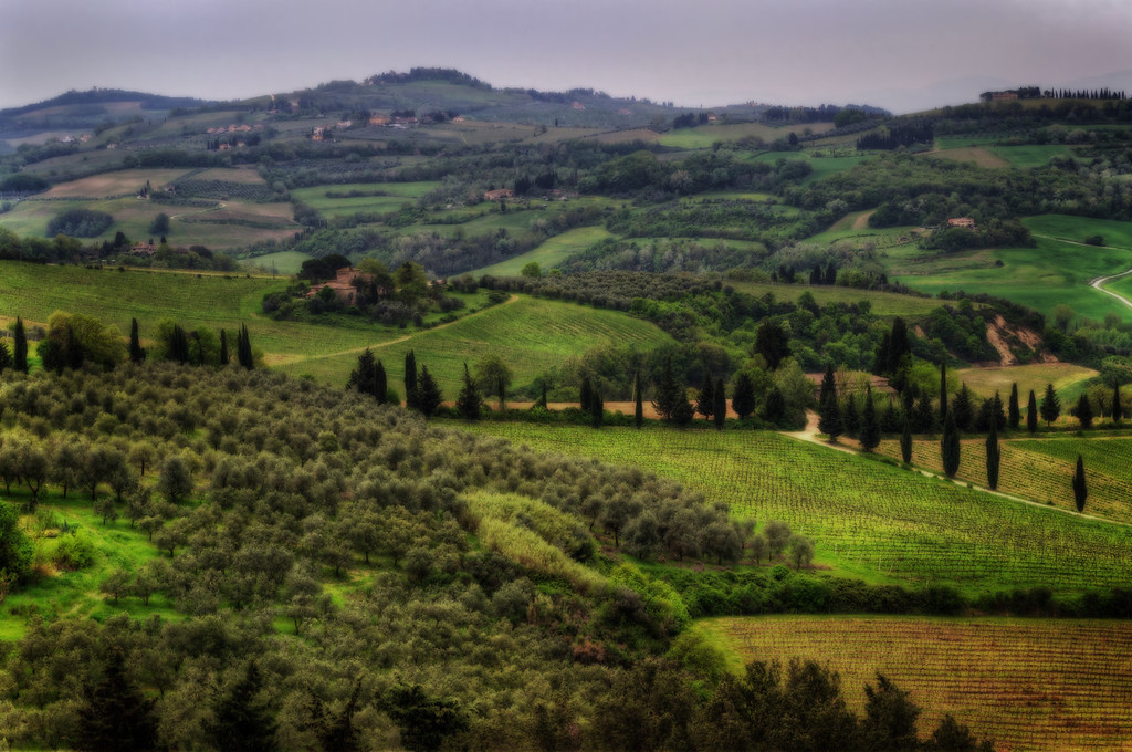 Tuscan Wine Region (Florence, Italy)
