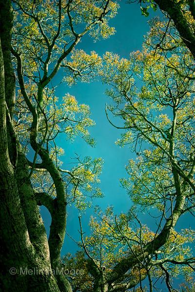 Trees on Aqua