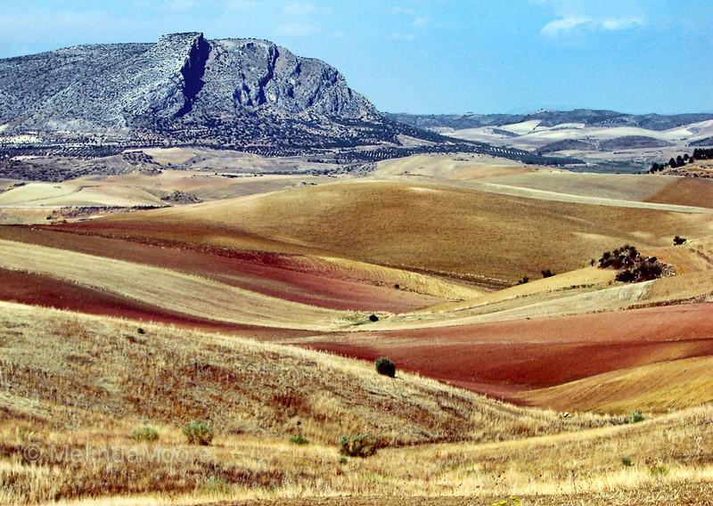 Campo Andalusia