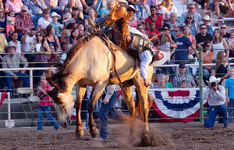 Bare back riders try and stay on the horses long as possible during the Pioneer Days Rodeo. In Ogden, on July 19, 2014.