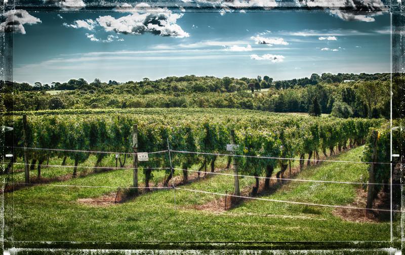Stonington Vineyards Fall Winefest 2012