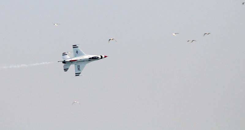 Thunderbird and Gulls - Cleveland Air Show 2011