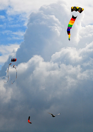 Kites and Birds Share the Sky - Cleveland Kite Festival