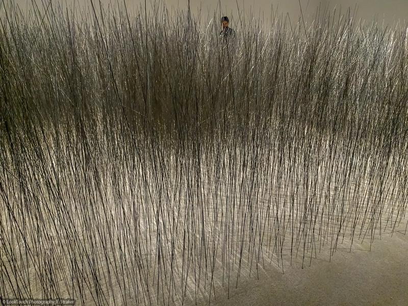Relatum (Iron Field) by Lee Ufan
