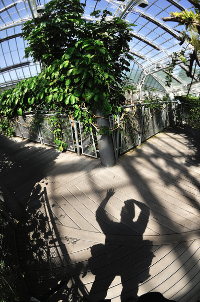 My Shadow in the Glasshouse - Botanical Gardens