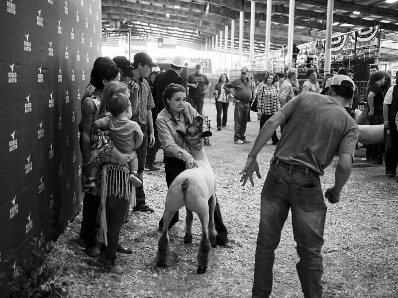 Livestock Show, Rodeo Austin - Austin, Texas