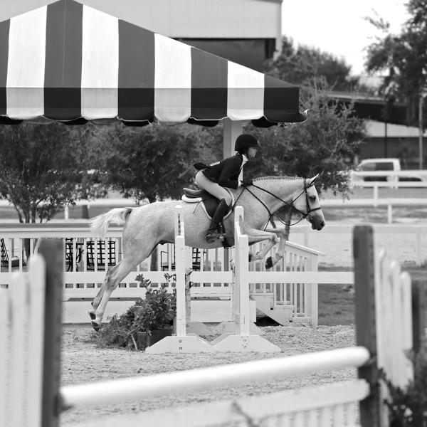 Scene #10,  Great Southwest Equestrian Center - Katy, Texas