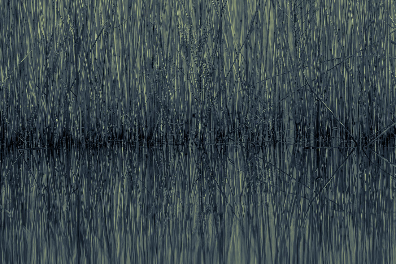 Grassy Reflection