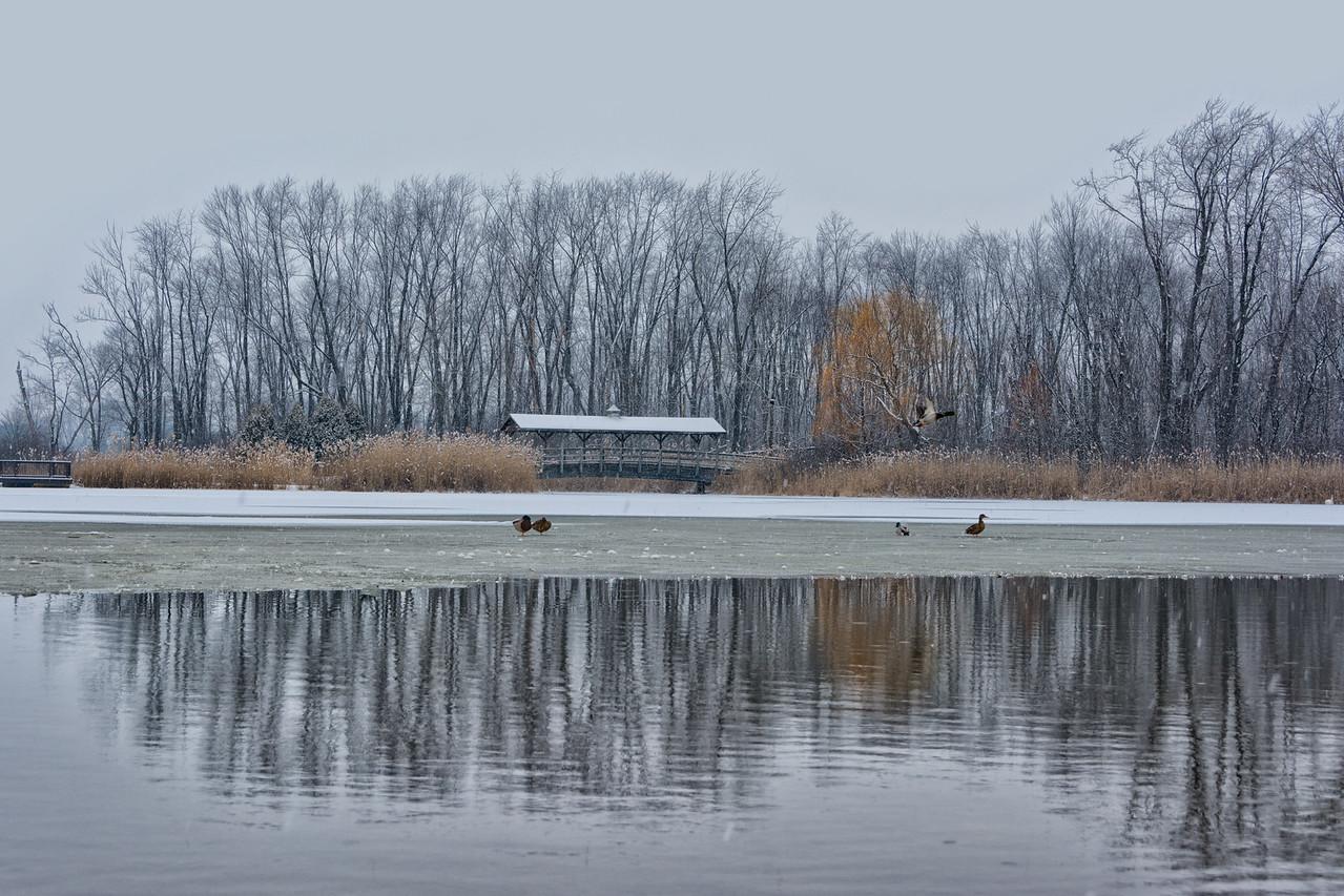 Long Park - Commerce Township, MI
