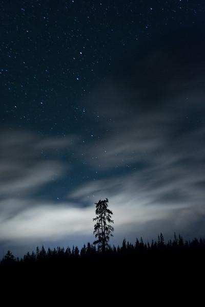 Lone Pine - Yellowstone 2015